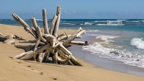 Una spiaggia dei Caraibi - Sputnik Italia