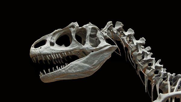 Fossile di dinosauro (immagine illustrativa) - Sputnik Italia