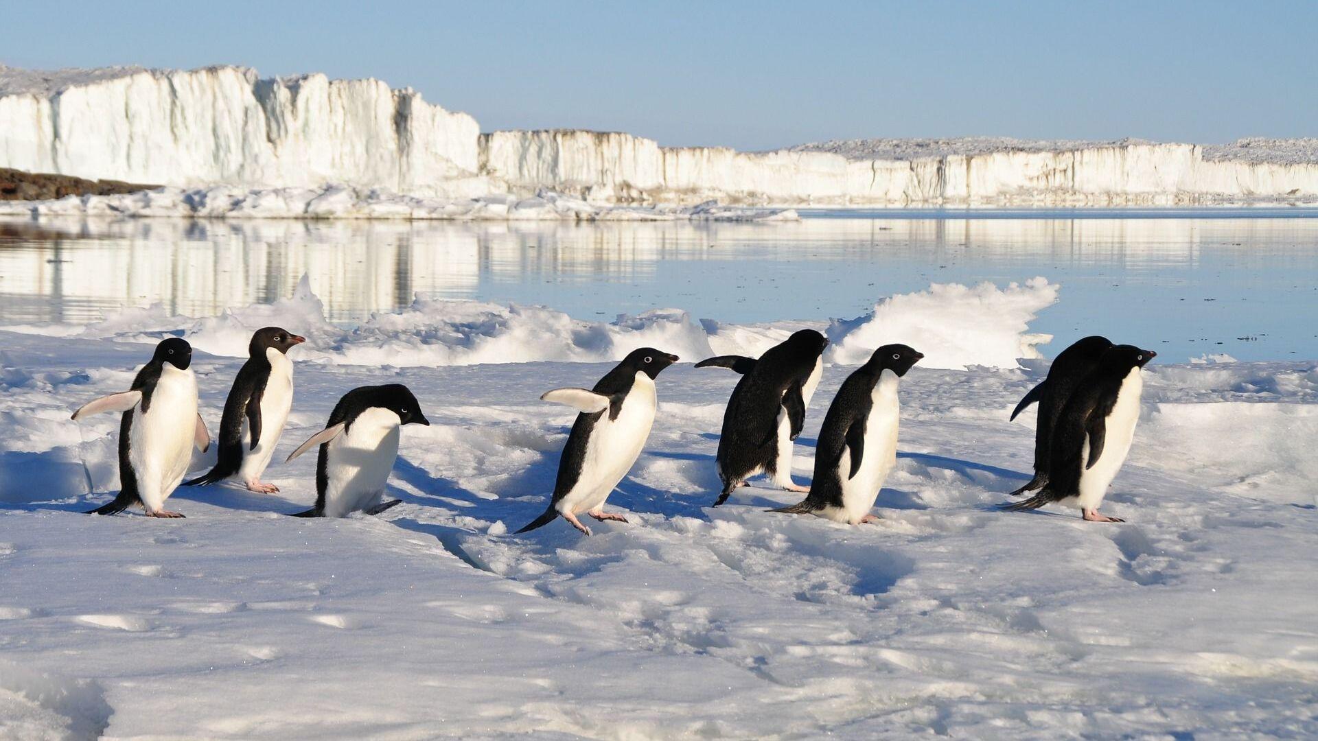 Pinguini (immagine di riferimento) - Sputnik Italia, 1920, 17.07.2021