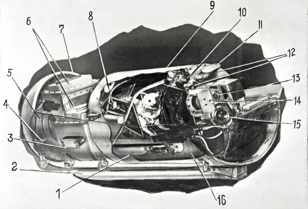 La cabina ermetica degli animali nel contenitore catapultabile a bordo della navicella satellite. - Sputnik Italia