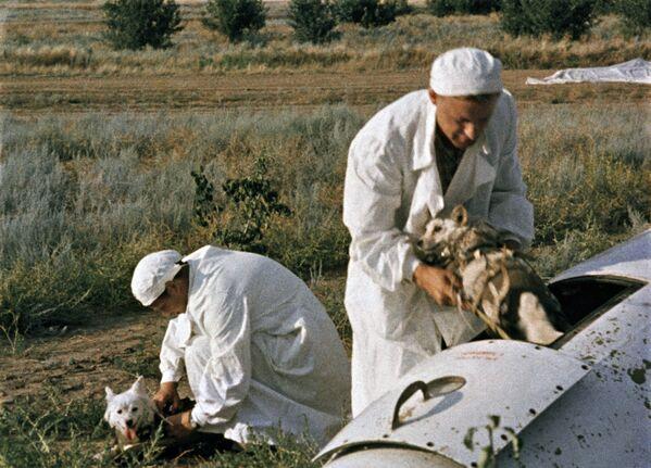 I medici tirano fuori i cani dopo il test dalla cabina del razzo. - Sputnik Italia
