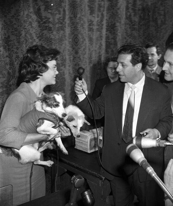 I cani Belka e Strelka danno un'intervista al corrispondente della radio di Mosca, 1960. - Sputnik Italia