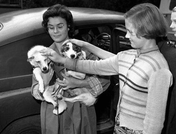 Una ragazza coccola i cani cosmonauti sovietici Belka e Strelka, 1960. - Sputnik Italia