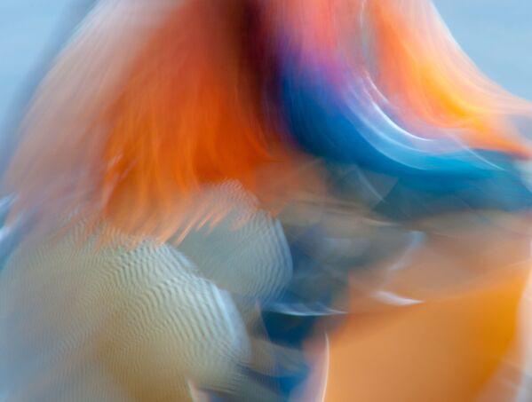 Foto Mandarino astratto del fotografo britannico James Hudson, vincitore della categoria Immaginario creativo. - Sputnik Italia