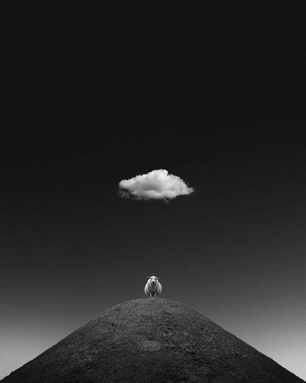 Lo scatto La pecora illuminata di Kathrin Federer, Minimalist Photographer 2020 - Sputnik Italia