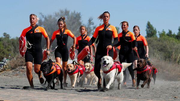 Группа итальянских женщин-спасателей со своими собаками на тренировке - Sputnik Italia