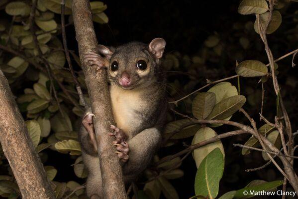 La foto del fotografo Matthew Clancy, Australian Geographic Nature Photographer 2020 - Sputnik Italia