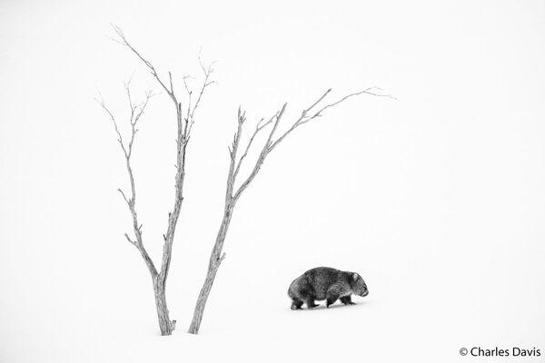 La foto del fotografo Charles Davis, Australian Geographic Nature Photographer 2020 - Sputnik Italia
