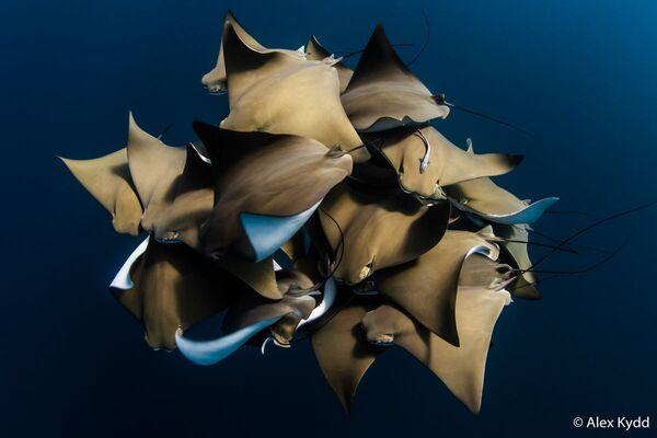 La foto del fotografo Alex Kydd, Australian Geographic Nature Photographer 2020 - Sputnik Italia