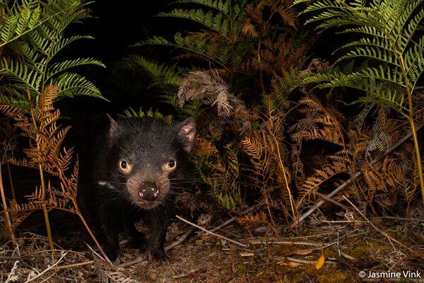 La foto della fotografa Jasmine Vink, Australian Geographic Nature Photographer 2020 - Sputnik Italia