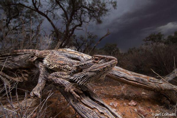 La foto del fotografo Jari Cornelis, Australian Geographic Nature Photographer 2020 - Sputnik Italia