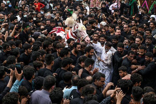 I musulmani sciiti si riuniscono per toccare un cavallo bianco che simboleggia quello usato dal santo musulmano del VII secolo Imam Hussein in battaglia, durante il mese islamico di Muharram prima delle cerimonie di Ashura, a Lahore il 29 agosto 2020, Pakistan - Sputnik Italia