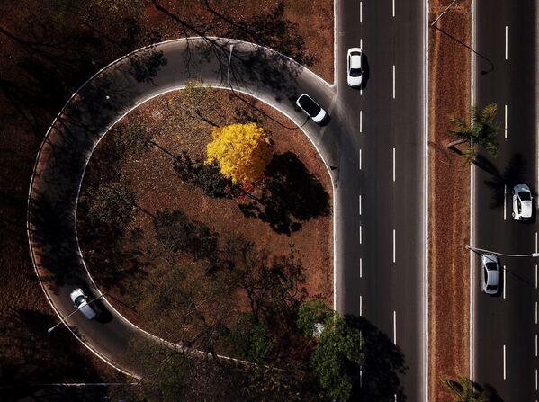 Vista aerea di ipe giallo (Handroanthus serratifolius) nella regione centrale di Brasilia, il 1° settembre 2020 - Sputnik Italia