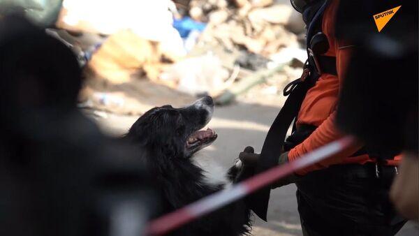 Esplosione a Beirut, i cani soccorritori dalla Russia trovano le vittime - Sputnik Italia