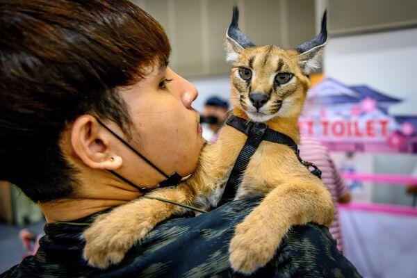 Un visitatore porta il suo caracal sulle spalle durante il Pet Expo Thailand 2020 a Bangkok, il 5 settembre 2020. - Sputnik Italia