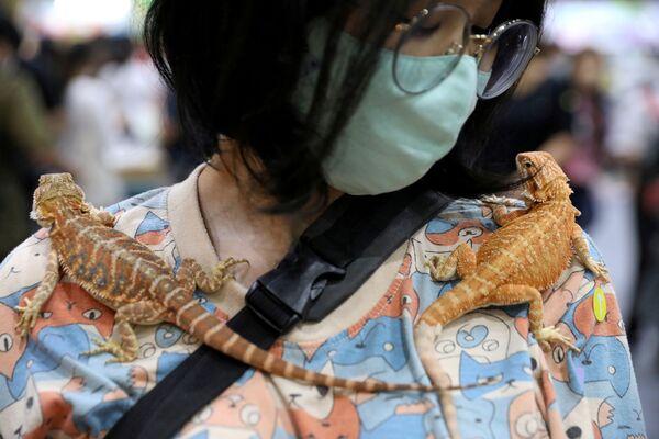 Una donna porta due gechi sulle spalle al Pet Expo Thailand a Bangkok, Thailandia, 6 settembre 2020. - Sputnik Italia