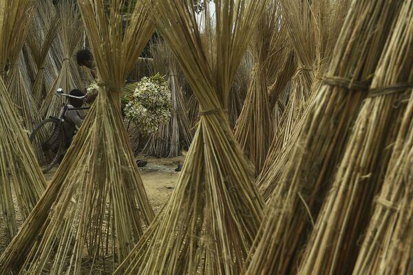 Un contadino nei pressi di Calcutta, in India. - Sputnik Italia