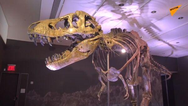 Christie's, all'asta lo scheletro di un T-Rex - Sputnik Italia