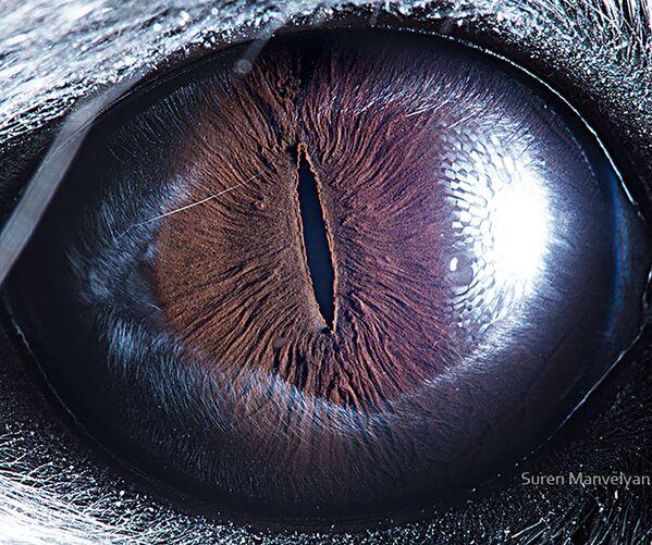 La foto macro degli occhi di cincillà, Suren Manvelyan - Sputnik Italia