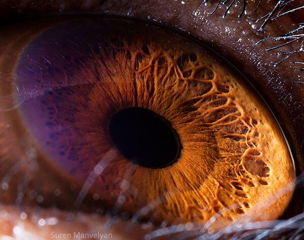 La foto macro degli occhi di scimpanzé, Suren Manvelyan - Sputnik Italia