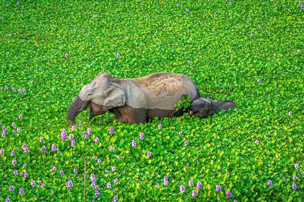 La foto Aspetta mamma, guarda cosa ho per te! del fotografo Kunal Gupta, The Comedy Wildlife Photography Awards 2020 - Sputnik Italia