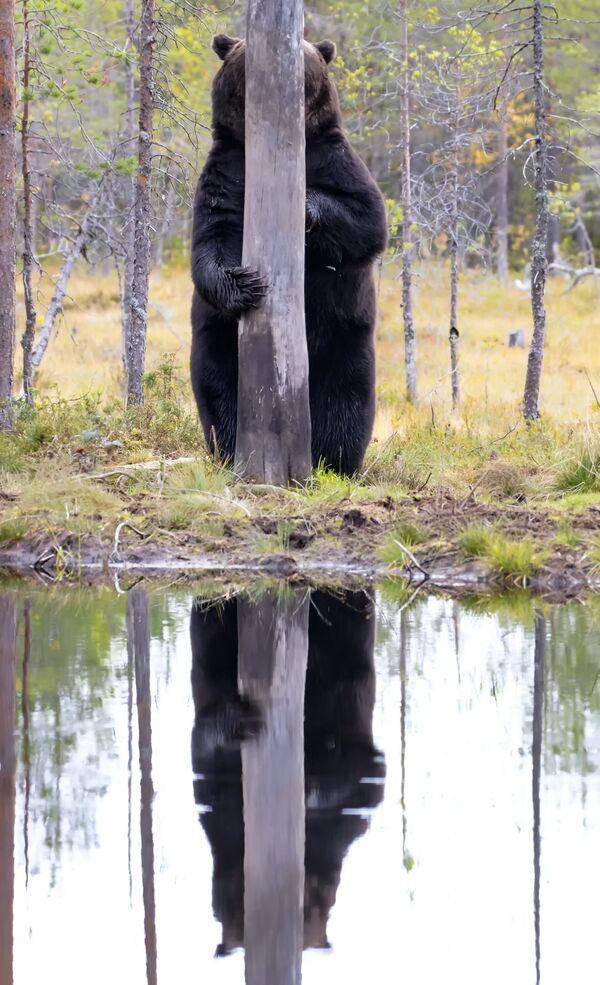 La foto Doggo del fotografo Esa Ringbom, The Comedy Wildlife Photography Awards 2020 - Sputnik Italia