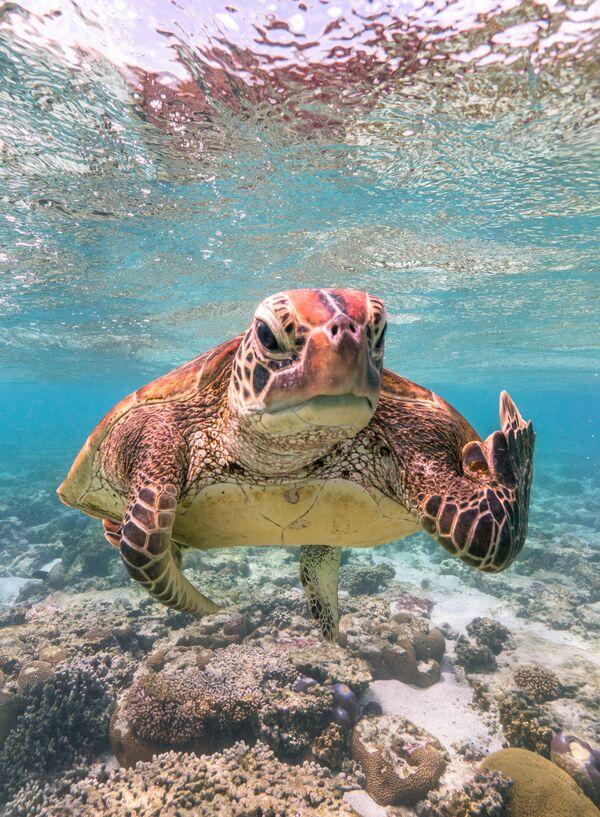 La foto La tartaruga Terry mostra il dito medio del fotografo Mark Fitzpatrick, The Comedy Wildlife Photography Awards 2020 - Sputnik Italia