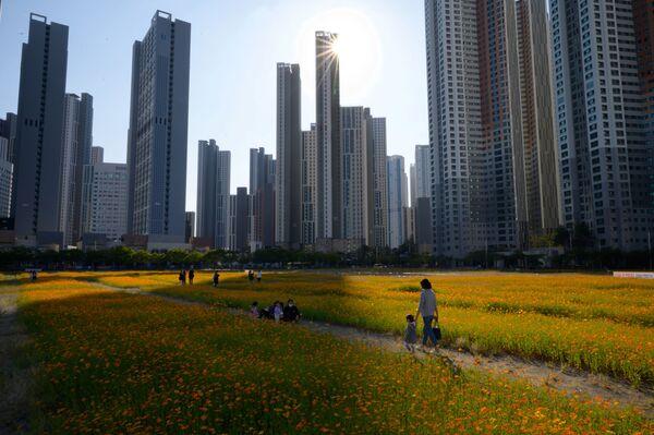 La gente passa per il campo di cosmo fiorito a Seoul - Sputnik Italia