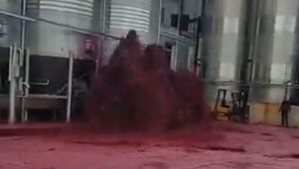 In Spagna azienda inondata di vino rosso - Video - Sputnik Italia