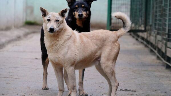 Cani randagi accolti in un canile - Sputnik Italia