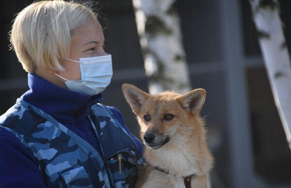 Cinologo con uno dei cani della razza shalaika dell'unità cinofila del dipartimento per la gestione della sicurezza aerea di Aeroflot all'aeroporto Sheremetyevo. La Shalaika è una razza ibrida originata da un incrocio iniziale tra pastore lappone e sciacallo dorato.  - Sputnik Italia