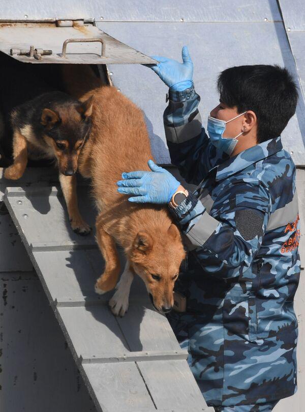 Cinologi addestrano i cani dell'unità cinofila dell'Aeroflot a rivelare il Coronavirus - Sputnik Italia