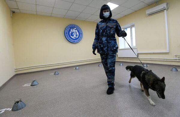 Cinologo addestra un cane dell'unità cinofila dell'Aeroflot a rivelare il Coronavirus - Sputnik Italia