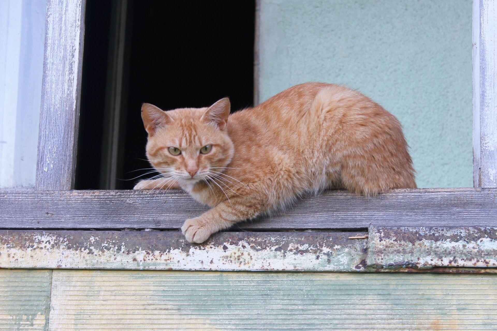 17 febbraio – giornata nazionale del gatto, perché si celebra e perché proprio oggi - Sputnik Italia, 1920, 17.02.2021
