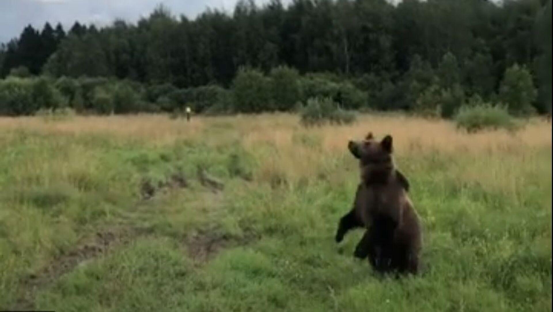 Russia, orso caccia il drone - Sputnik Italia, 1920, 04.04.2021