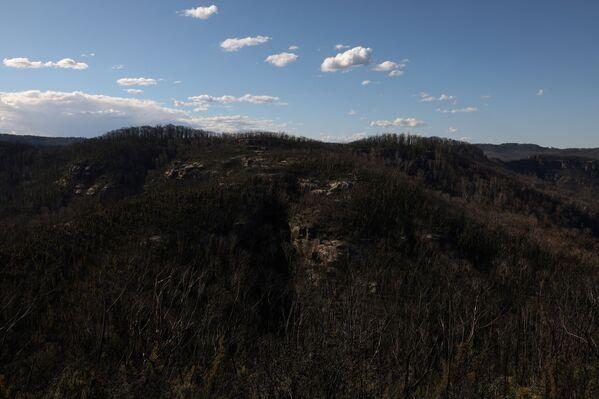 Una foresta dove abitavano i koala colpita dagli incendi.  - Sputnik Italia