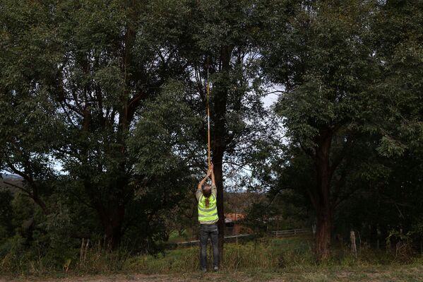 Un volontario dell'organizzazione WIRES raccolta i fogli per i koala nel centro di riabilitazione, Kurrajong, Australia. - Sputnik Italia