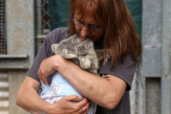 Una volontaria con i cuccioli di koala salvati. - Sputnik Italia