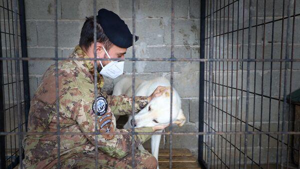 Militari italiani del Comando Regionale Ovest della Kosovo Force in aiuto ai randagi del Kosovo - Sputnik Italia