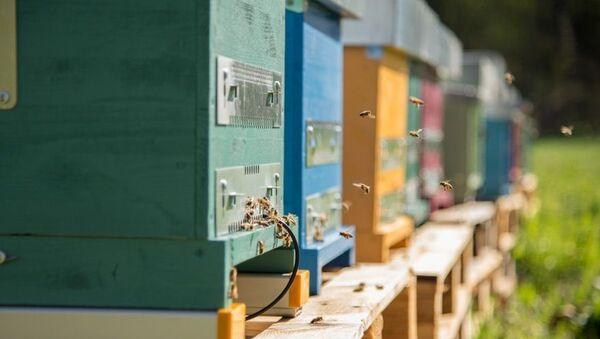 Alveare, adottare le api per Natale con 3Bee - Sputnik Italia