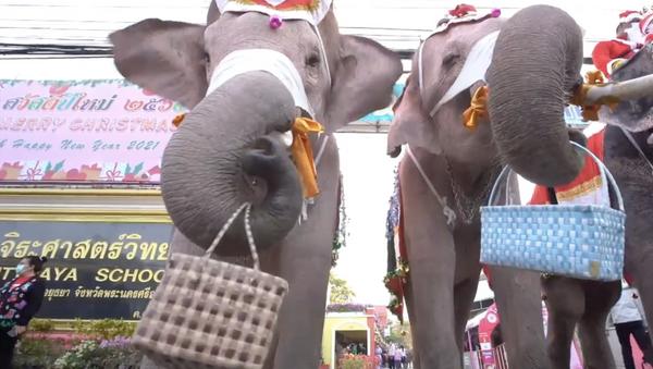 Thailandia: elefanti vestiti da Babbo Natale portano mascherine protettive ai bambini - Sputnik Italia