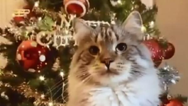 Gatto con albero di Natale - Sputnik Italia