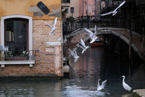 Molti animali hanno trovato nella città di Venezia un luogo ospitale dove vivere: uccelli su un canale a Venezia - Sputnik Italia