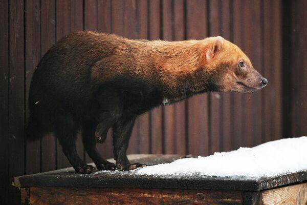 Uno speoto dello zoo di Mosca - Sputnik Italia
