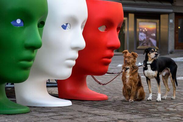 I due cani in attesa del loro padrone accanto a sedili di plastica, Italia - Sputnik Italia