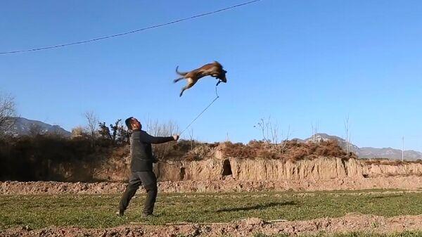 Cane-ninja conquista i social cinesi - Sputnik Italia