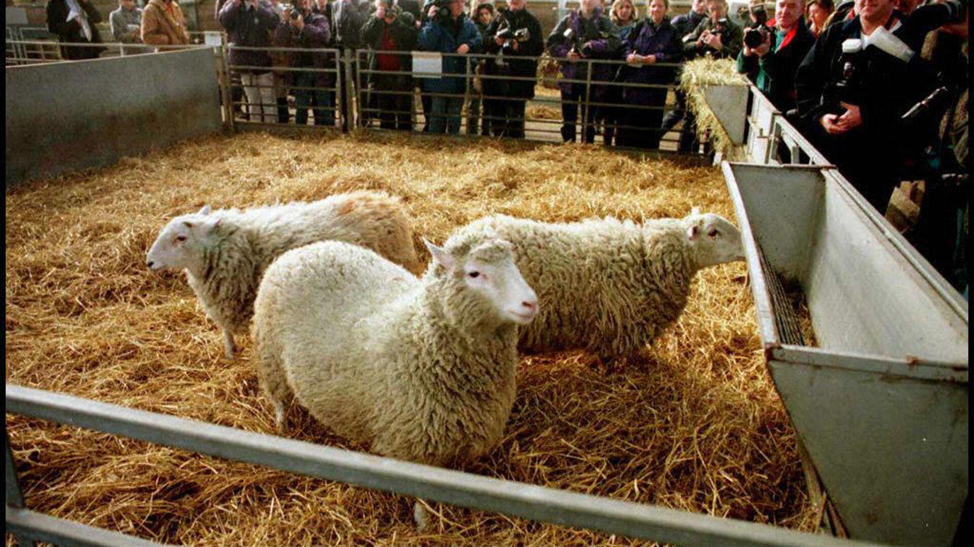 Клонированная овечка Долли - Sputnik Italia, 1920, 05.07.2021