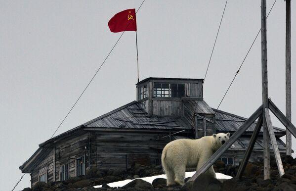 Un orso polare sul territorio della stazione polare nei pressi della baia di Tikhaya, sull'isola di Hooker che fa parte dell'arcipelago della Terra di Francesco Giuseppe, Oceano Artico.  - Sputnik Italia
