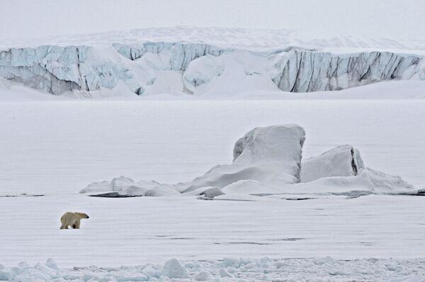 Orso polare su una lastra di ghiaccio nell'Oceano Artico. - Sputnik Italia