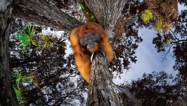 La foto Il mondo sta andando sottosopra del fotografo canadese Thomas Vijayan, che ha conquistato il 1 posto nella categoria Animali nel loro habitat ed è diventata la vincitrice del concorso World Nature Photography Awards 2020 - Sputnik Italia